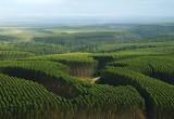 Anche l'eucalipto ha la sua mappa genetica
