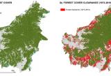 Raso al suolo un terzo della foresta pluviale del Borneo