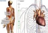 Google mapperà il corpo umano