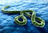 Liberia: otto persone morte per malattia misteriosa in contea del Sud