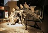 Stegosauri: campioni di lotta