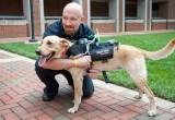 Bardatura ipertecnologica per parlare con i cani