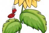 Come coltivano le formiche?