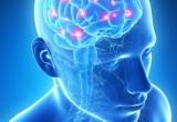 Cervello: svelate le differenze tra uomo e donna