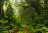 Ebola e frammentazione foreste: il nesso c'è