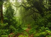 Foreste e diossido di carbonio: buone notizie