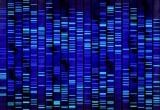 Il genoma umano ha una sua 'grammatica'
