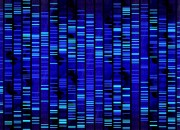 Sars-Cov-2. Studio italiano: nessuna differenza nel genoma del virus rispetto al ceppo cinese