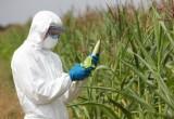 OGM con benefici: un grosso potenziale commerciale