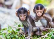 I primi primati della Terra vivevano sugli alberi