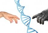 I nostri antenati ancestrali usavano le mani come noi