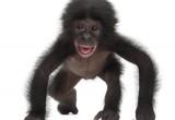 Le scimmie preferiscono il bicchiere mezzo pieno