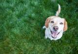 I cani riconoscono il sorriso