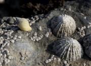 Scoperto il materiale più resistente in natura