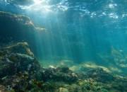 Ecosistemi marini: decenni per distruggerli, millenni per ricostruirli