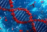 Nuova tecnologia permette di correggere geni difettosi negli embrioni