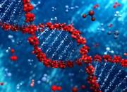Maxi studio internazionale scopre i geni che colorano i capelli