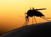 Attrarre zanzare gravide per combattere la malaria