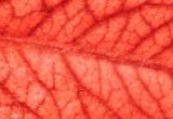Nanoaghi generano nuovi vasi sanguigni