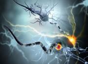 Parkinson: nuove speranza da una molecola lipidica endogena