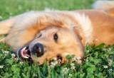 Tra cane e padrone basta uno sguardo ed è amore