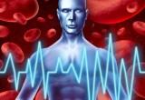 Infarto: scoperta la proteina che ripara il cuore
