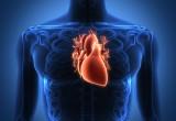 Negli atleti ECG alterato forse dovuto ad anatomia cardiaca