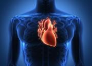 L'insufficienza cardiaca si cura con le staminali