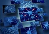 Malattie neurologiche: il sistema immunitario è collegato al cervello