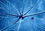 Sistema nervoso: scoperto come si rigenera