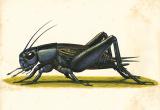 Expo: presentato il Libro Bianco degli insetti commestibili