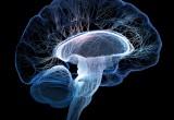 Ricreato cervello invecchiato in provetta