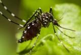 Scoperto perché sfuggire alle zanzare è impossibile