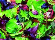 Vita più lunga con le proteine vegetali