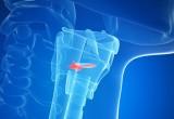 Create in laboratorio corde vocali umane funzionanti