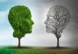"""Per il cervello ci sono ancora le """"mezze stagioni"""". In autunno ricorda di più"""