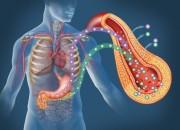 Diabete: vaccino anti tubercolosi può abbassare livelli di zucchero nel sangue