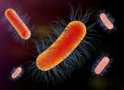 Scovata proteina che predicerischiodimortalità da sepsi