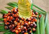"""Olio di palma: troppo allarmismo infondato. Ferrero: """"I nostri ingredienti sono di qualità e sostenibili"""""""