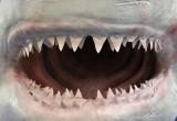 Denti eterni? Scoperto il meccanismo della rigenerazione negli squali