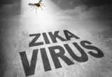 Zika: ancora un'allerta dall'OMS