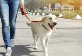 Il cane, un elisir per il cuore