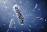 """Infezioni batteriche: tre studi italiani svelano come """"resistono"""" agli antibiotici"""