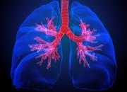 Obesità e asma: presenza di tessuto adiposo nelle vie aeree
