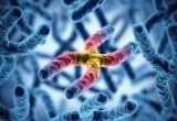 Scoperto come bloccare l'invecchiamento cellulare