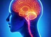 Hiv: atrofia sostanza grigia del cervello accelera invecchiamento