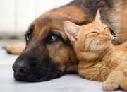 Donne over 50: meno ictus e infarti se hanno un cane o un gatto