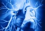 Cuore: in due TAVR su tre si verificano piccoli emboli cerebrali