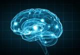 Cervello: perché l'apprendimento è così complesso
