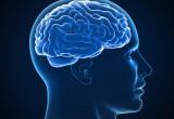 """USA: mappata la corteccia cerebrale. Ha 360 aree, di cui 97 """"nuovissime"""""""